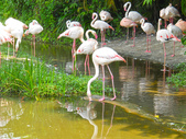 動物園:DSCN0007.jpg