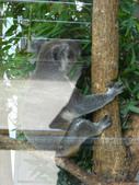動物園:DSCN0016.jpg