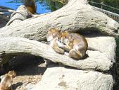 動物園:DSCN0054.jpg
