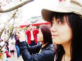 陽明山花季:DSC08529.JPG