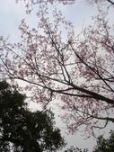 陽明山花季:DSC08503.JPG