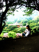 陽明山花季:DSC08509.JPG
