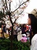 陽明山花季:DSC08527.JPG