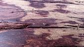 wood:DSC_0134.jpg