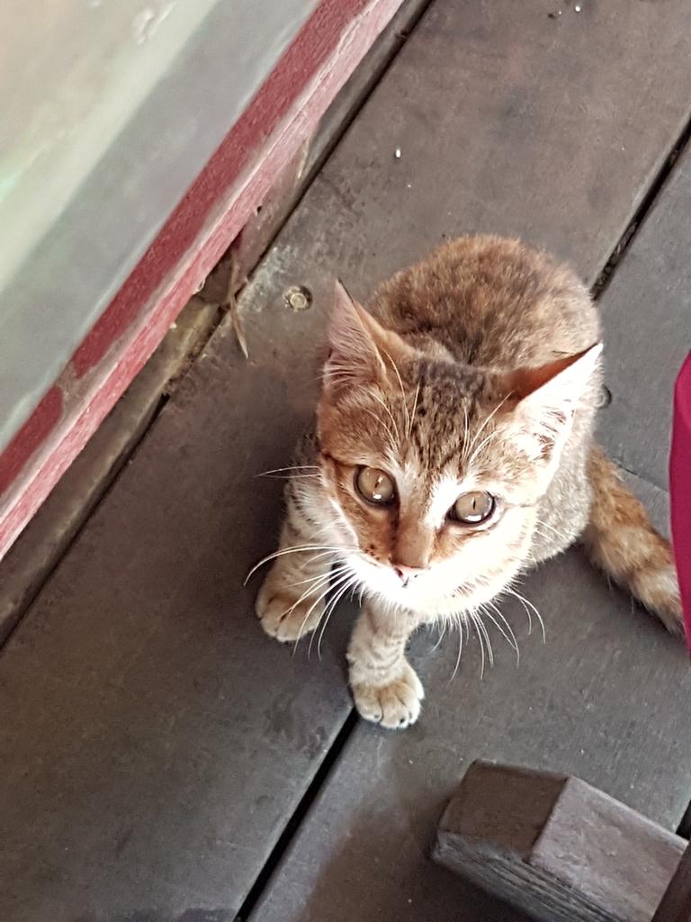 2016小琉球三天二夜:24山豬溝餐館的可愛小貓.jpg