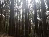 2017過年記遊:新竹觀霧賞雲趣:20170131過年出遊(新竹檜山巨木步道神木段)04.jpg