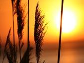 落日系列:植物.jpg
