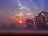 落日系列:日落裡的飛鳥.jpg
