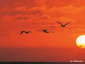 網路的圖片:夕陽無限好.jpg