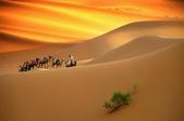 落日系列:沙漠裡行走的駱駝.jpg