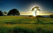 落日系列:日出之樹.jpg
