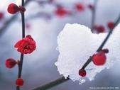 楓葉系列:冬日二.jpg