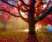 楓葉系列:好美的楓葉.jpg