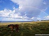彩虹系列:草原上的彩虹.jpg