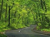 網路的圖片:綠色走廊.jpg