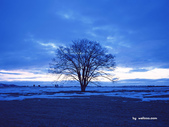 落日系列:冬天一.jpg
