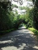 網路的圖片:綠色隧道