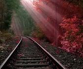 楓葉系列:好美的鐵路.jpg