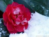 楓葉系列:冬日四.jpg