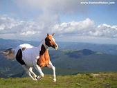 網路的圖片:奔跑的馬一