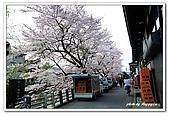 99日本立山、合掌村(二):A9904241389櫻花-高山.jpg