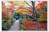 105京都賞楓:A10511251213楓紅-寶筐院-嵐山-京都.jpg