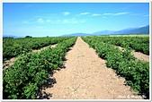 107-2保加利亞:A10706030650玫瑰農場-卡贊勒克市(玫瑰谷)-保加利亞.jpg
