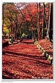 105日本關西:A10511230474楓紅地毯-雞足寺-琵琶湖.jpg