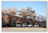 99日本立山、合掌村(二):A9904251673櫻花-白川鄉合掌村.jpg