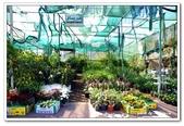 99富吉拉-阿拉伯聯合大公國:A9902161009蔬果市場-富吉拉-阿拉伯聯合大公國.jpg