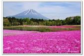 104日本_箱根、河口湖:01A10405112028富士芝櫻祭-河口湖.jpg
