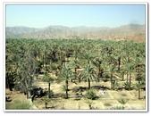 99富吉拉-阿拉伯聯合大公國:D9902160067椰棗林-AL BADIYA清真寺旁-富吉拉-阿拉伯聯合大公國.j