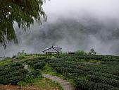 95北橫:A010意境-玉蘭茶園