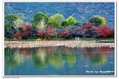 105京都賞楓:A10511251048楓紅-大覺池-嵐山-京都.jpg