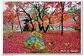 105京都賞楓:A10511272244楓紅-永觀堂-京都.jpg