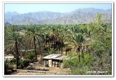 99富吉拉-阿拉伯聯合大公國:A9902161083綠洲-AL BADIYA清真寺旁-富吉拉-阿拉伯聯合大公國.jpg