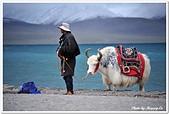107-3西藏B:A10709110405氂牛-納木措.jpg