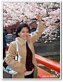 99日本立山、合掌村(二):B9904240168斐-櫻花-高山.jpg