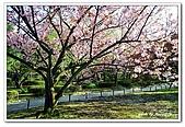 99日本立山、合掌村(二):A9904210176櫻花-金澤兼六園.jpg