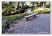99日本立山、合掌村(二):A9904210203滿地櫻花瓣-金澤兼六園.jpg