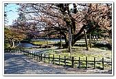 99日本立山、合掌村(二):A9904210214櫻花-金澤兼六園.jpg