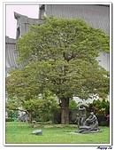 94靜思堂:A056靜思堂大樹