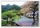 99日本立山、合掌村(二):A9904230741櫻花-妻籠宿.jpg