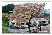 99日本立山、合掌村(二):A9904230853櫻花-妻籠宿.jpg