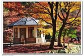 105日本關西:A10511230454楓紅-雞足寺-琵琶湖.jpg