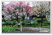 99日本立山、合掌村(二):A9904230859櫻花-妻籠宿.jpg