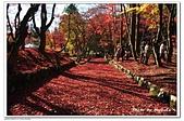 105日本關西:02A10511230514楓紅地毯-雞足寺-琵琶湖.jpg