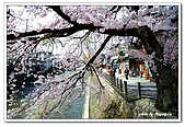 99日本立山、合掌村(二):A9904241297櫻花-高山.jpg