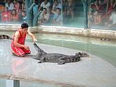 95泰國行:鱷魚表演