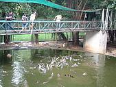 95泰國行:釣鱷魚